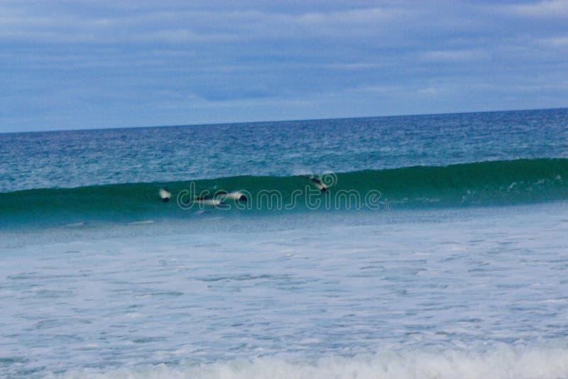 Delphine auf dem Strand lizenzfreies stockfoto