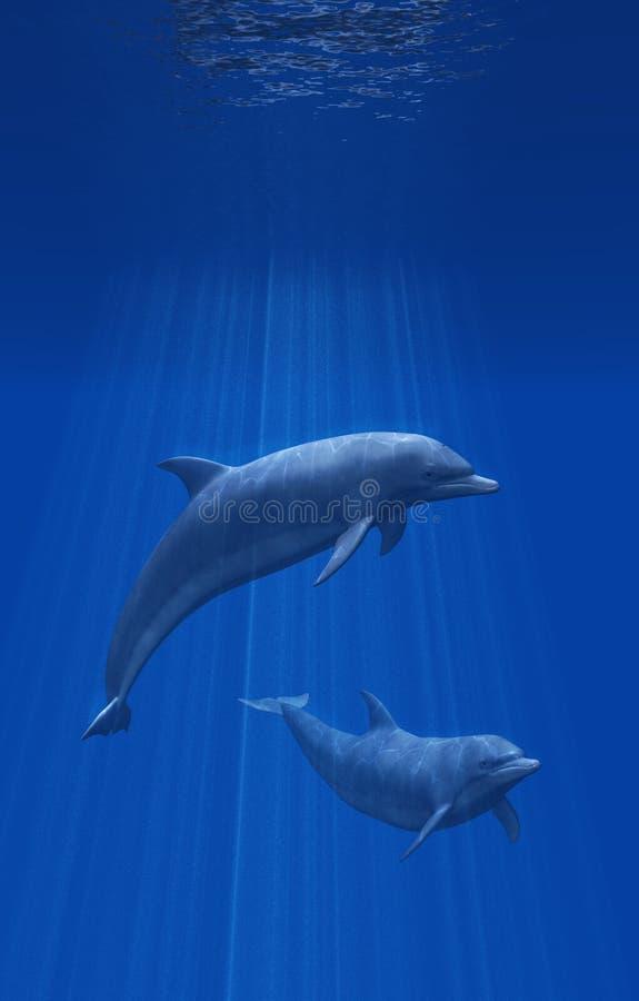 Delphine unterseeisch stock abbildung