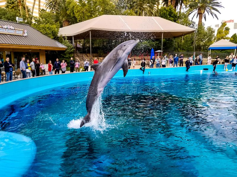 Delphinfliegen in der Luft lizenzfreie stockbilder