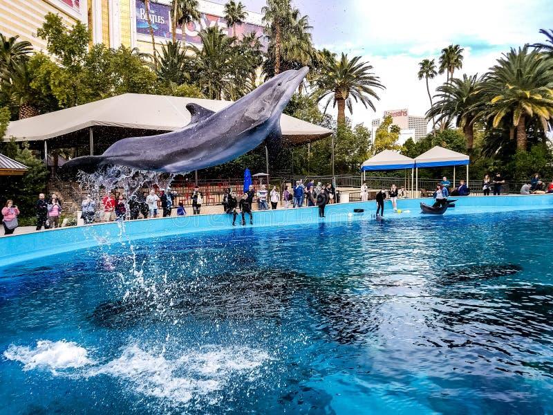 Delphinfliegen in der Luft stockfoto