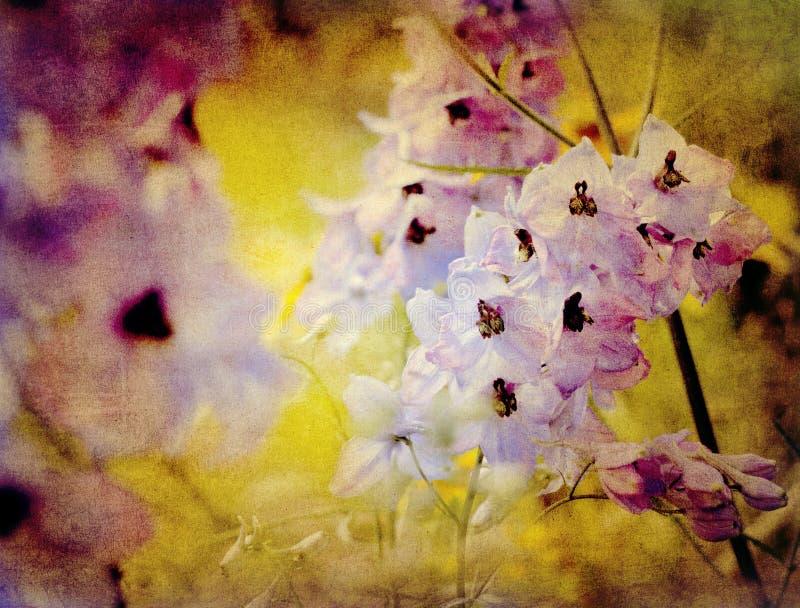 Delphinium de cru - larkspur photos stock
