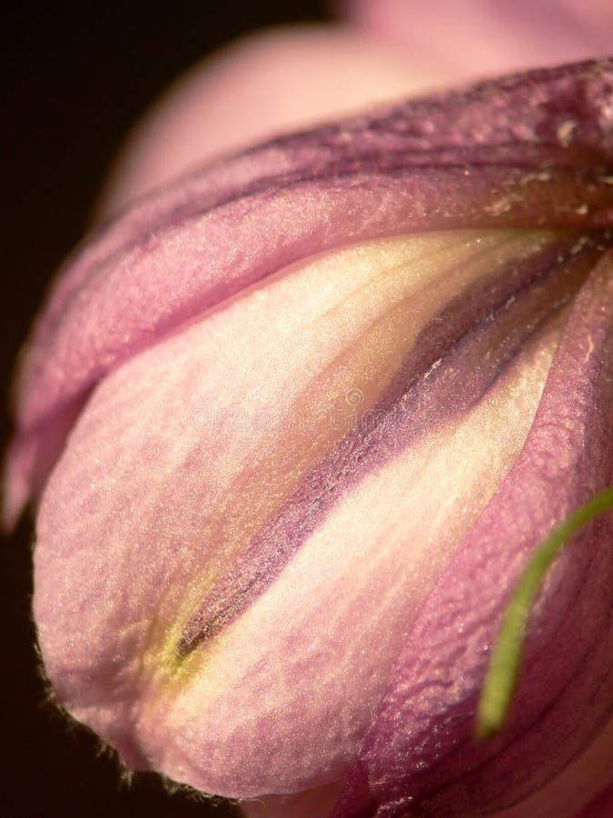delphinium kwiatów obrazy stock