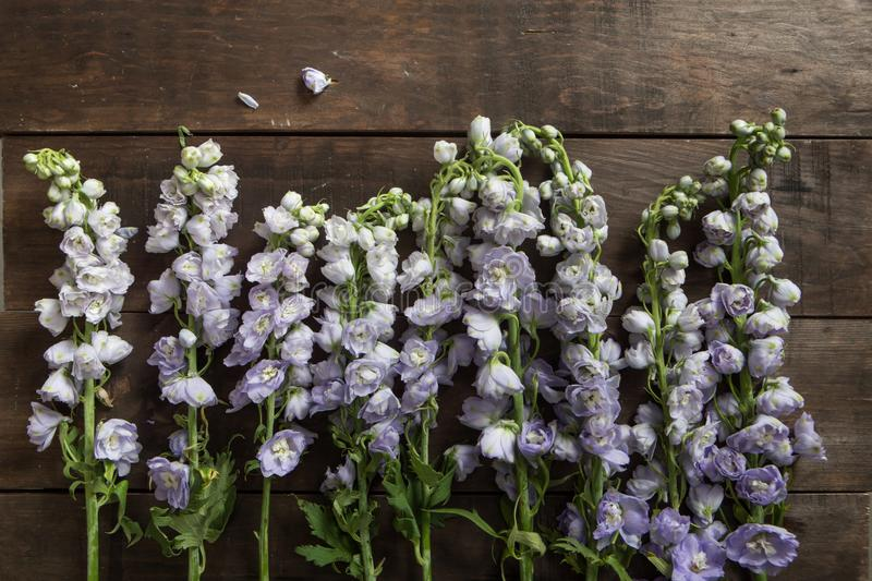 Delphinium on a wooden background stock photos