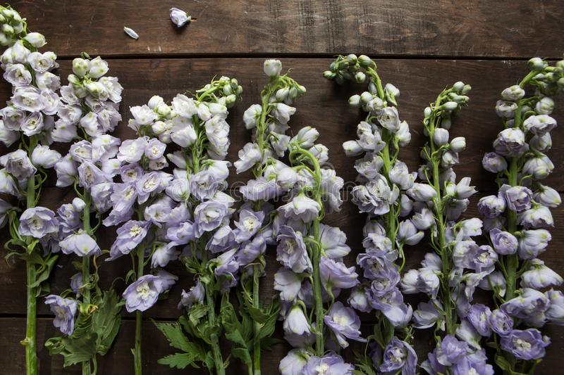 Delphinium on a wooden background stock images