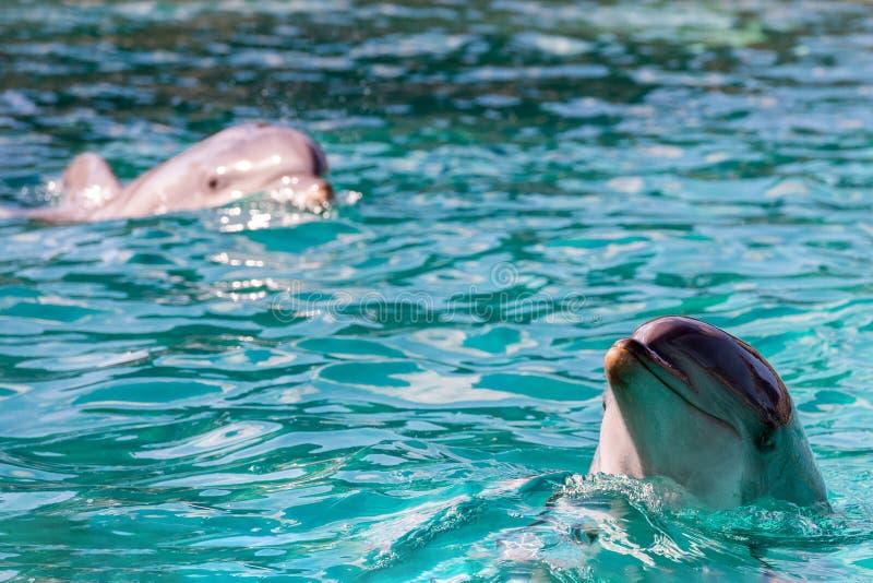 Delphinporträt, das Sie betrachtet lizenzfreies stockfoto