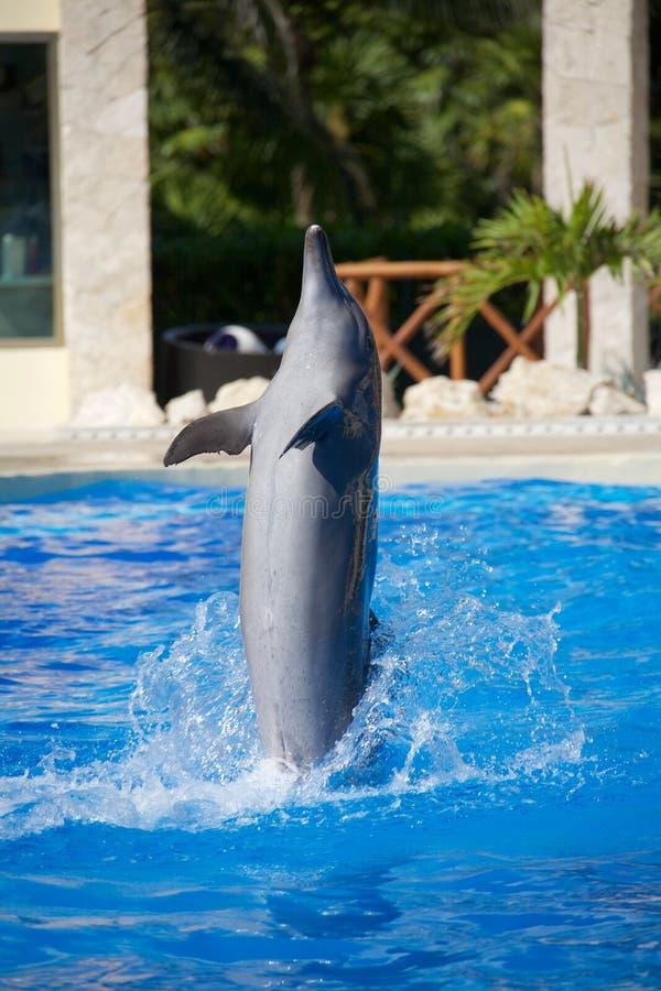 Delphinshow stockfoto