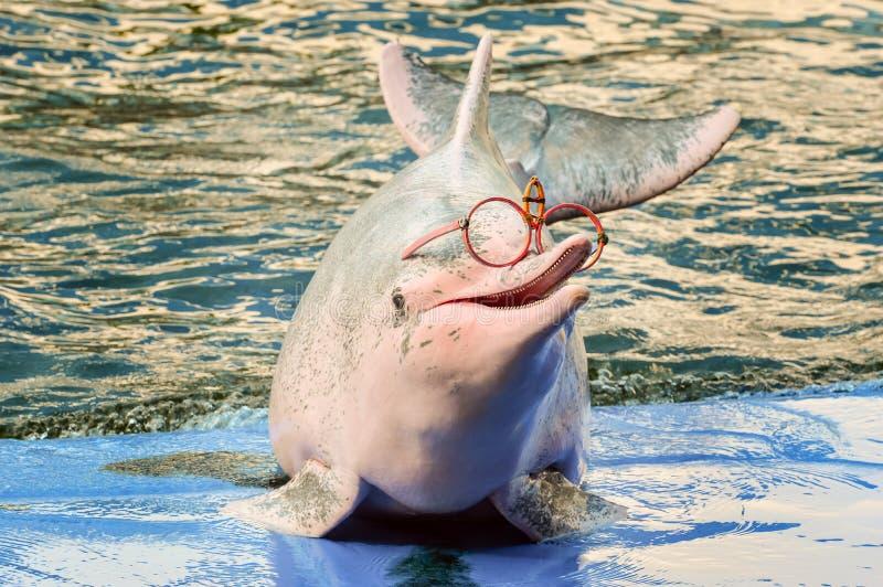 Delphinzeigungen im Zoo stockfotos