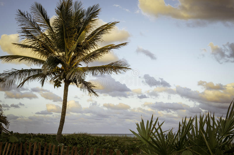 Delray Beach. With Palm Trees and Sky at Sunset royalty free stock photos