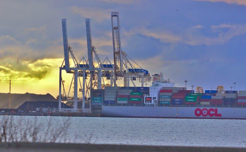 DELTA, CANADA - breng 14, 2019 in de war: groot vrachtschip worden die dat met lading bij Deltahaven wordt geladen stock afbeeldingen