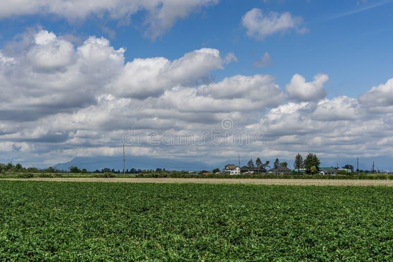 DELTA, CANADA - 8 JUIN 2019 : champ vert agricole avec des bâtiments et des nuages de ferme sur le ciel bleu photographie stock libre de droits