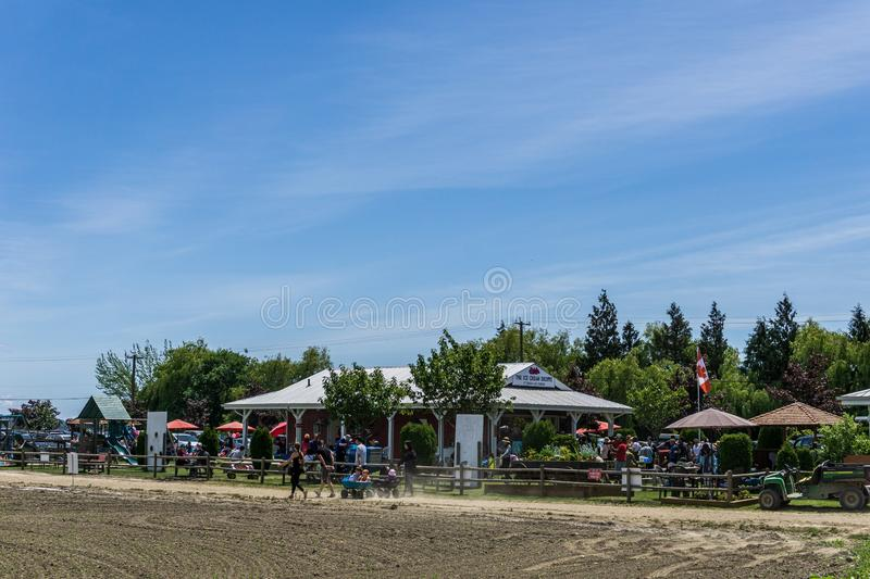 DELTA, CANADA - JUNE 8, 2019: people are going to pick up berries and buying ice cream at the Emma Lea Farms. Summer, outdoor, sky, travel, activity, bc stock images