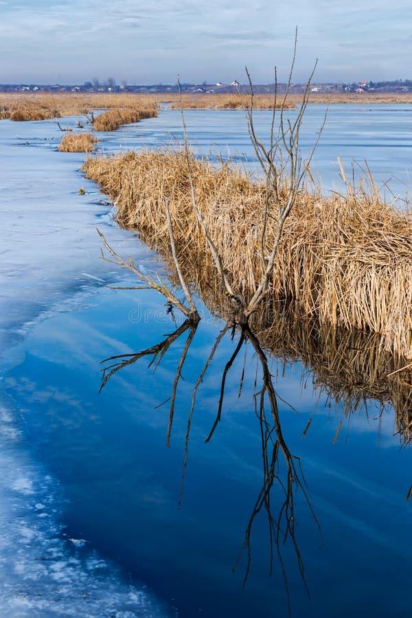 Delta Comana in Romania fotografia stock libera da diritti