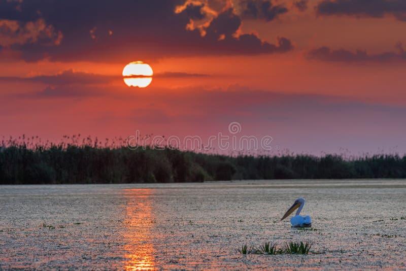 Delta de Danúbio, Romania imagem de stock royalty free