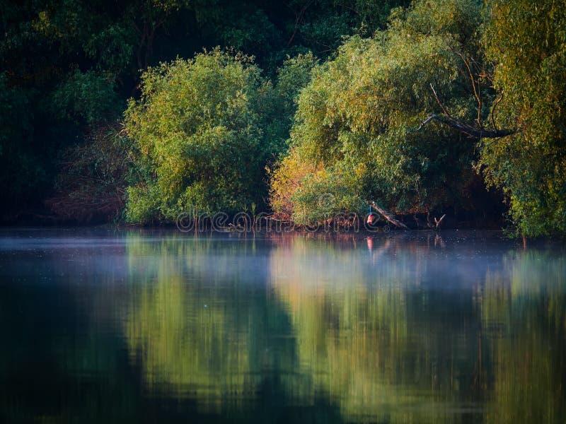 Delta de Danúbio, Tulcea, Romênia imagem de stock