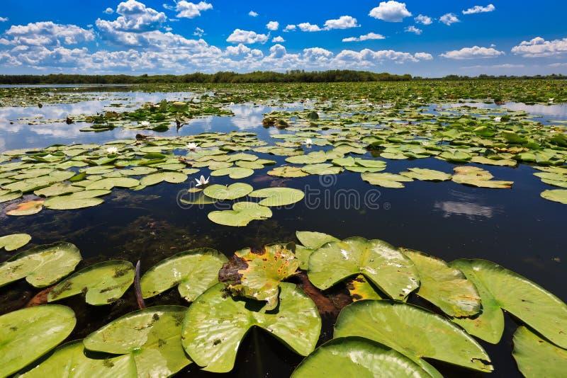 Delta de Danube, Roumanie photo libre de droits