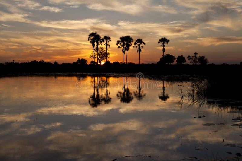 Delta de Okavango imagenes de archivo