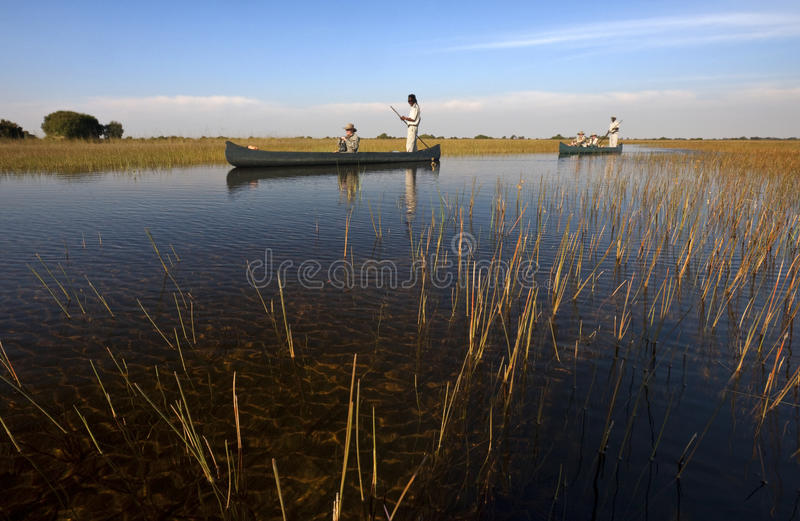 Delta di Okavango - Botswana immagine stock libera da diritti