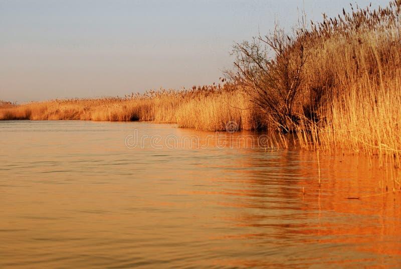 delta dunaju zdjęcie royalty free