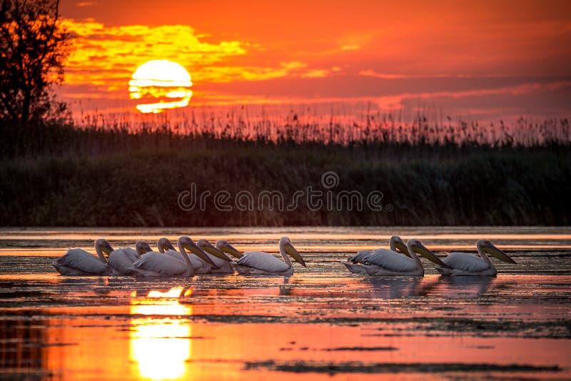 Delta Dunarii, Romania stock photos
