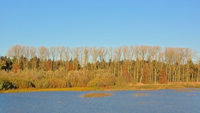 Delvis kala höstträd längs en sjö på en solig dag med klar blå himmel arkivbild
