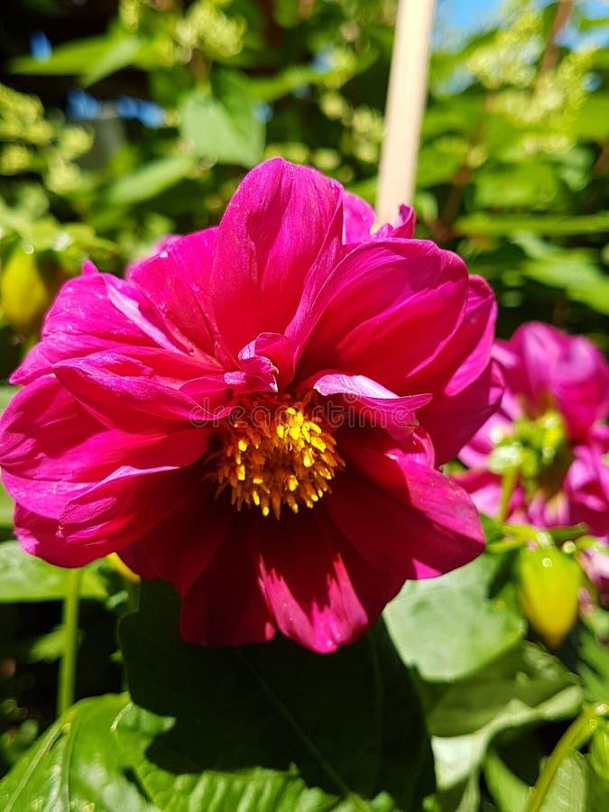 Dem Garten del aus de Blume fotografía de archivo