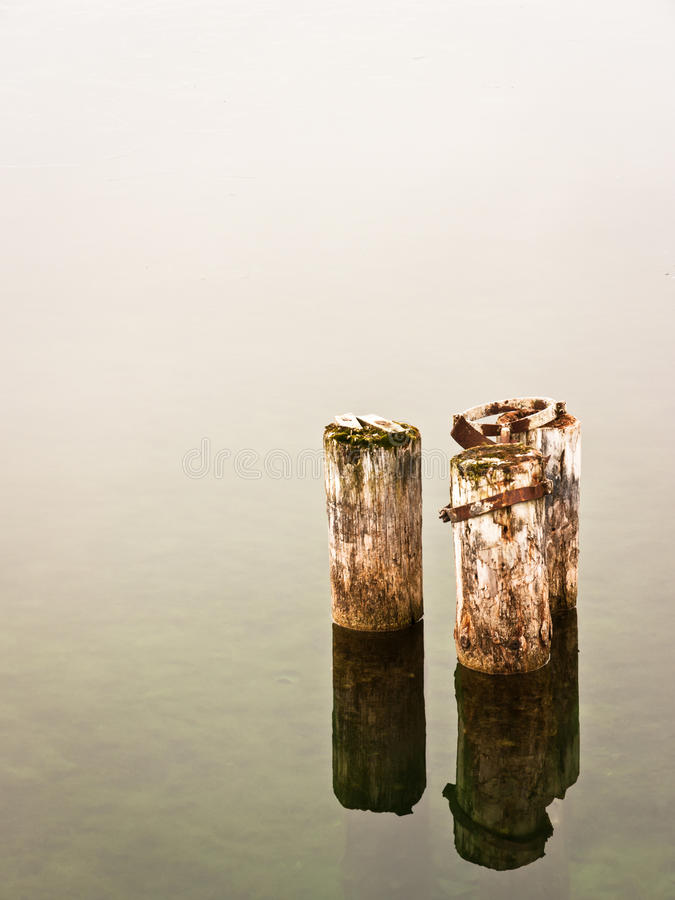 In dem See stockbilder
