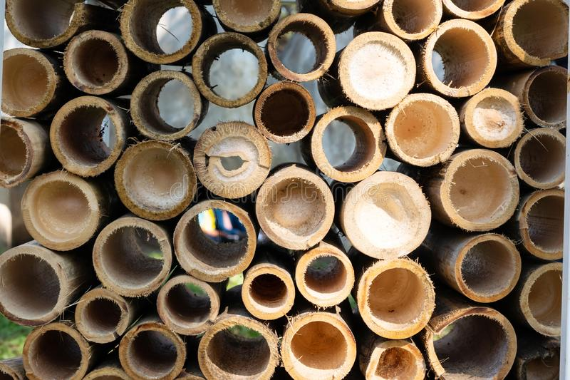 Demi bambou coupé images stock