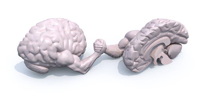 Demi cerveaux qui font le wrestlin de bras illustration libre de droits