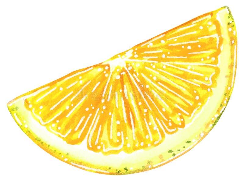 Demi illustration d'aquarelle de tranche de citron images libres de droits