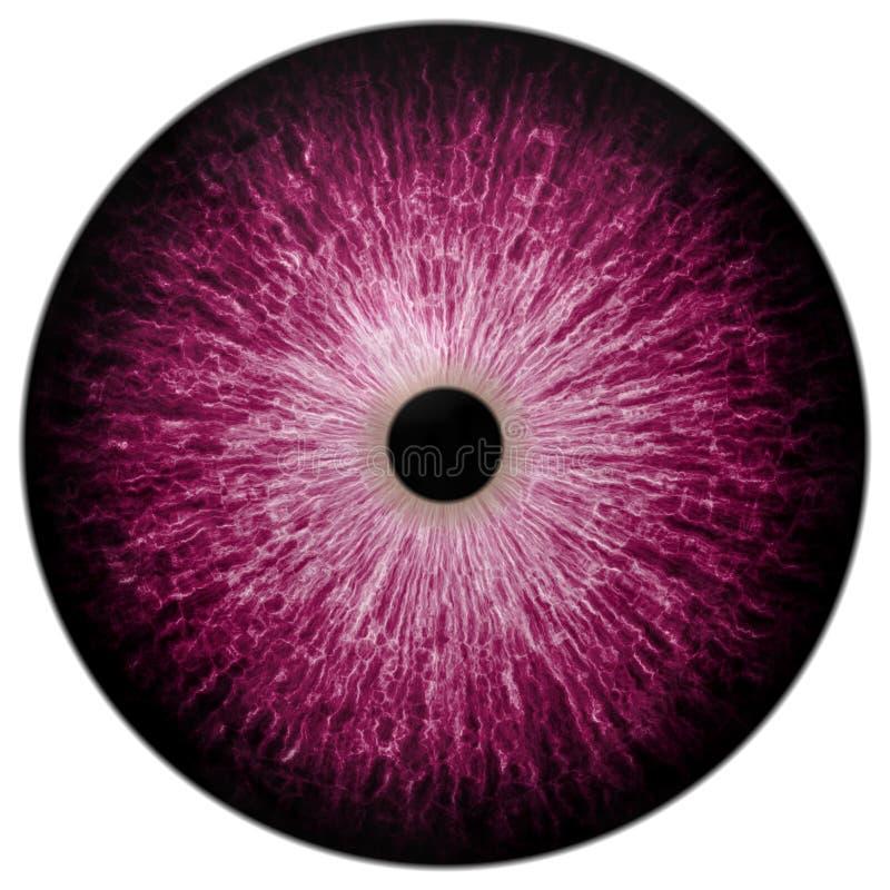 Demon purpury przyglądają się Halloween z czarnym uczniem i białym tłem, szarość okrąg obraz stock