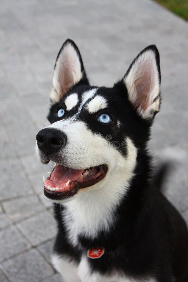 Demone del cane immagini stock libere da diritti