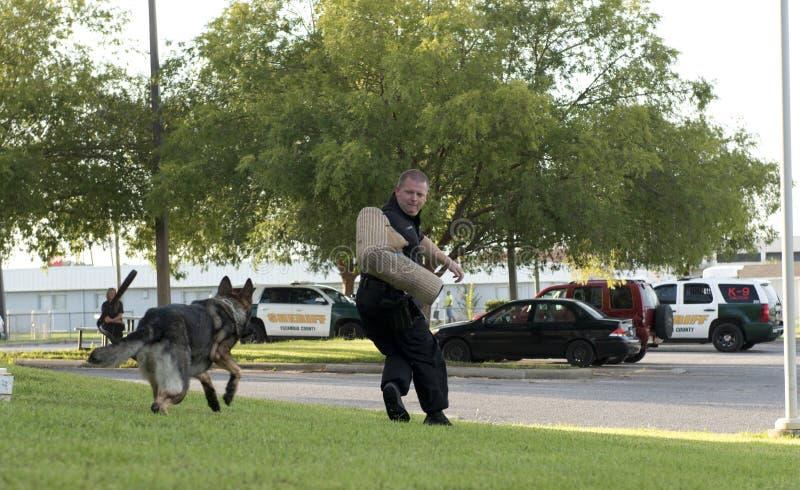 Demonstração da polícia K-9 imagem de stock