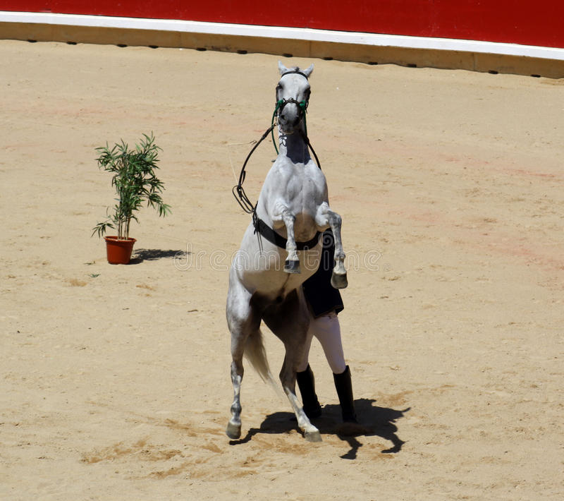 Demonstration of taming horse in the bullring of P