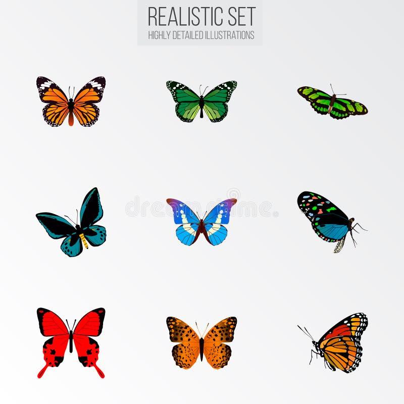 Demophoon realista, monarca, pavo real verde y otros elementos del vector El sistema de símbolos realistas de la mariposa también stock de ilustración