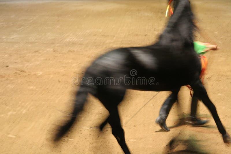 Demostración 2 del caballo foto de archivo
