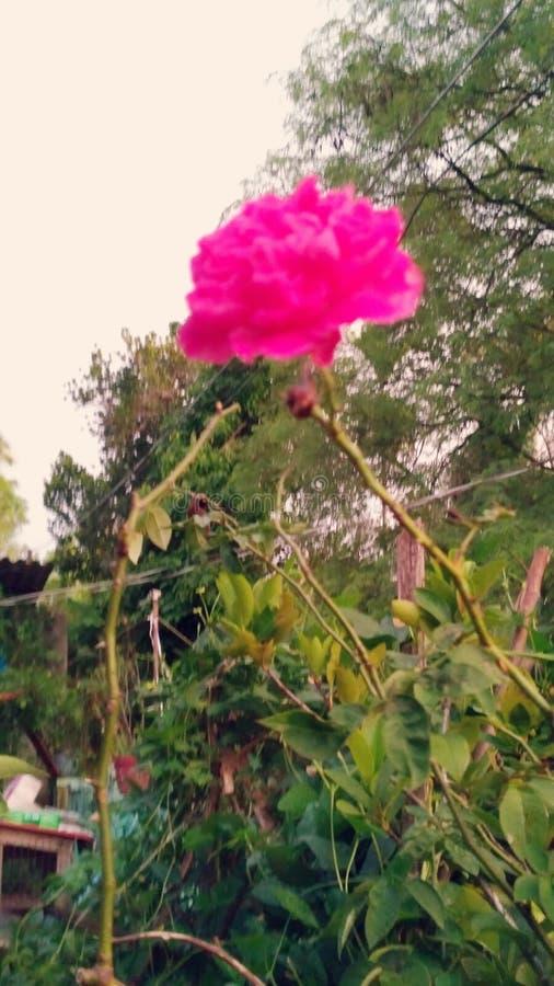 Demostración de flores imagen de archivo libre de regalías