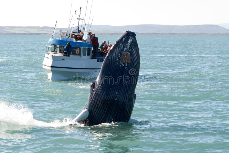 Demostración de la ballena fotografía de archivo
