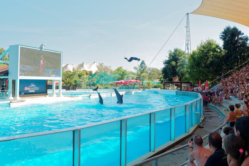Demostración de los delfínes en el parque de atracciones del agua imágenes de archivo libres de regalías