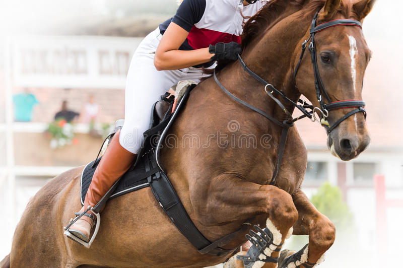 Demostración de salto del caballo fotos de archivo