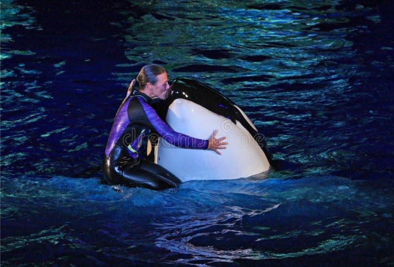 Demostración de Shamu en SeaWorld, Orlando, FL fotos de archivo