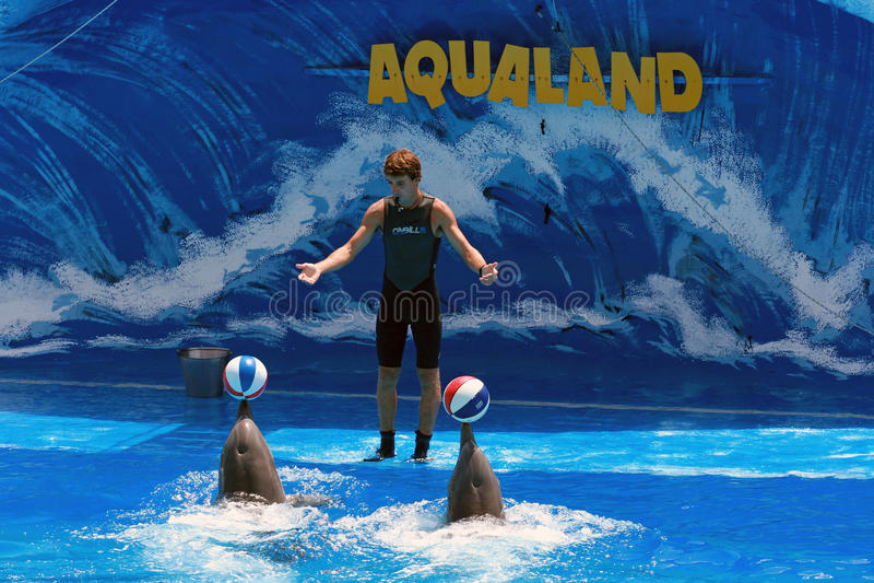 Demostración del delfín con el amaestrador - Aqualand Tenerife imagen de archivo libre de regalías
