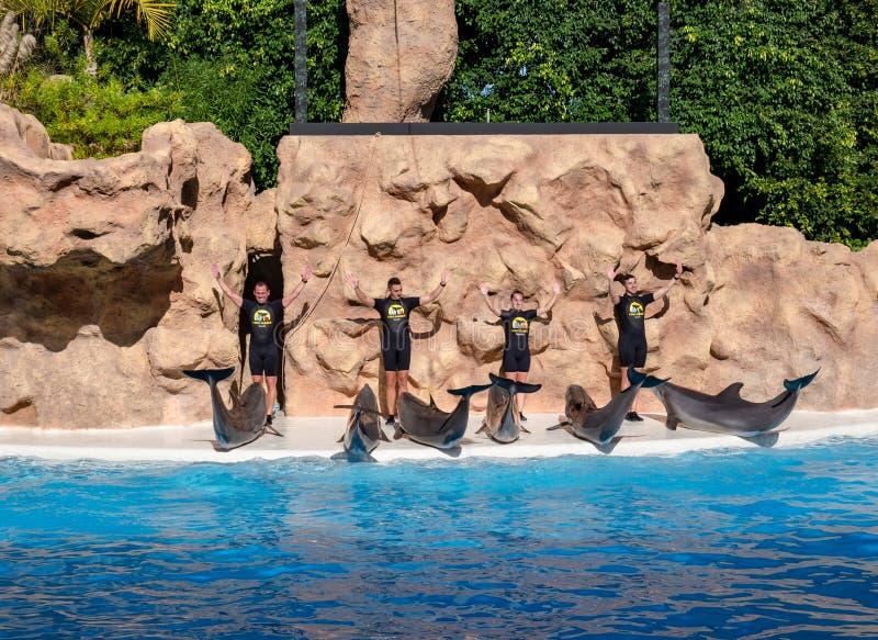 Demostración del delfín, piscina acuática de Loro Parque fotografía de archivo