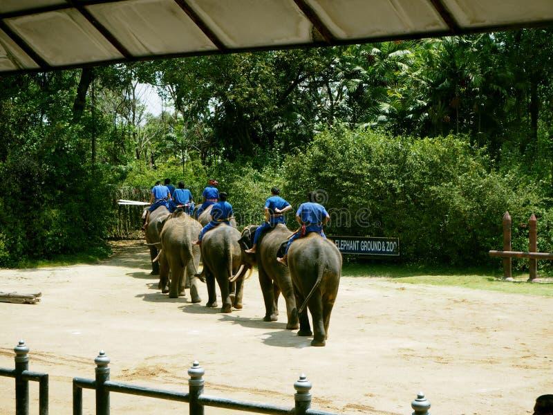 Demostración Nakhonpathom, Tailandia del elefante imágenes de archivo libres de regalías