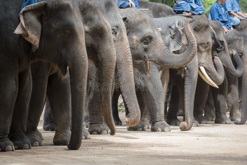 Demostración y entrenamiento del elefante con el mahout Lampang, Tailandia foto de archivo libre de regalías