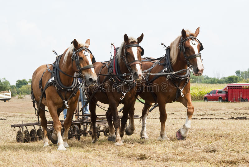 Demostraciones agrícolas traídas por caballo imagenes de archivo