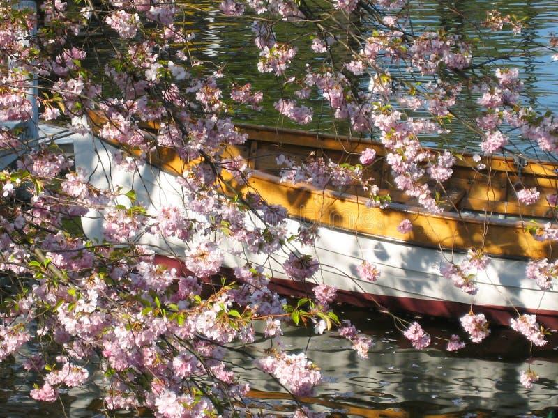 Den älskvärda sikten av ett träfartyg i Köpenhamn i Danmark omgav vid ett hav av blommor för ‹för †i en liten sjö royaltyfria foton