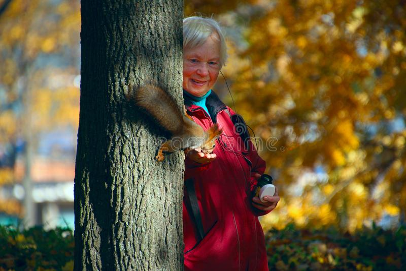 Den äldre kvinnan matar en ekorre på ett träd arkivbilder