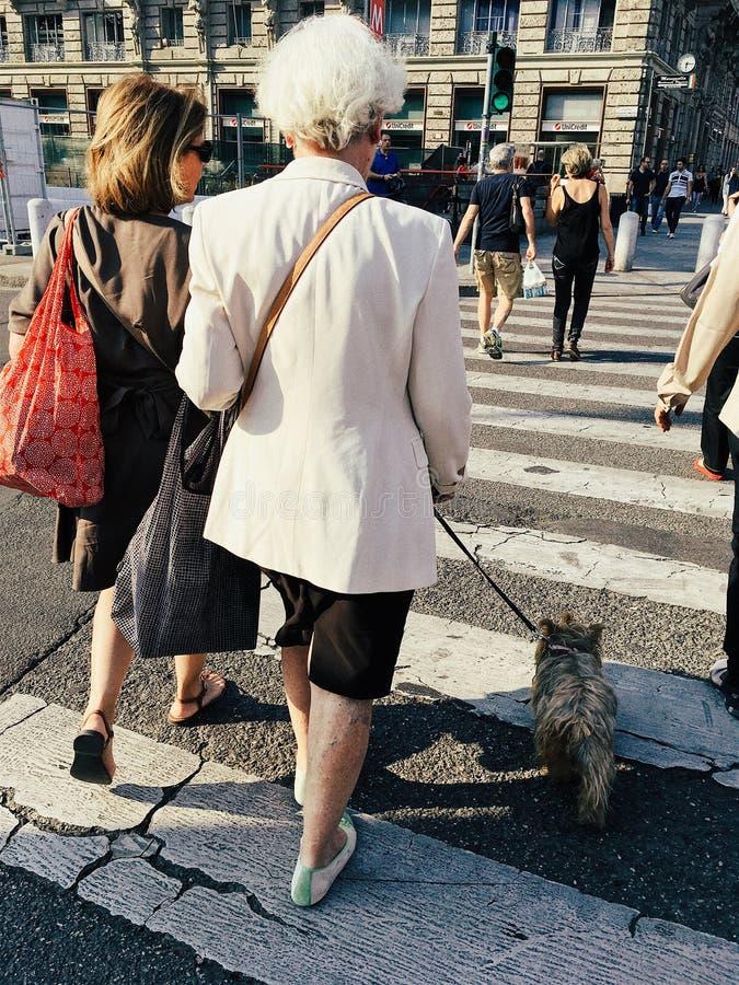 Den äldre kvinnan med en hundkorsning går gatan på övergångsstället arkivbilder