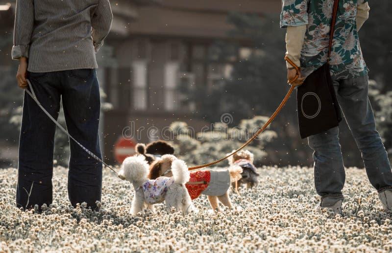 Den älsklings- hundkapplöpningen som spelar i, parkerar med deras ägare, medan blommapollen flyger i luften som kunde starta alle royaltyfri foto