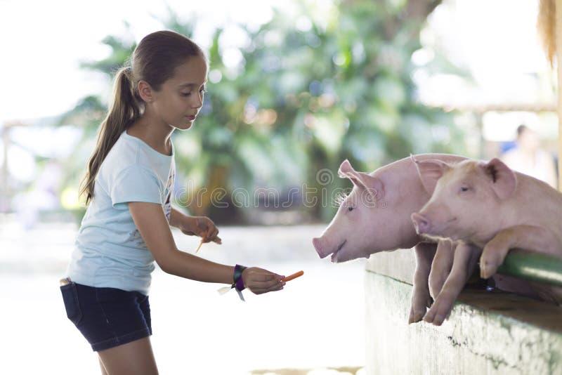 Den älskvärda flickan matar svinet royaltyfri foto